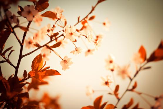Fantasy blossom